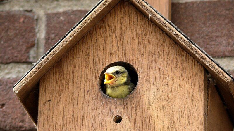 bird 953719 1280