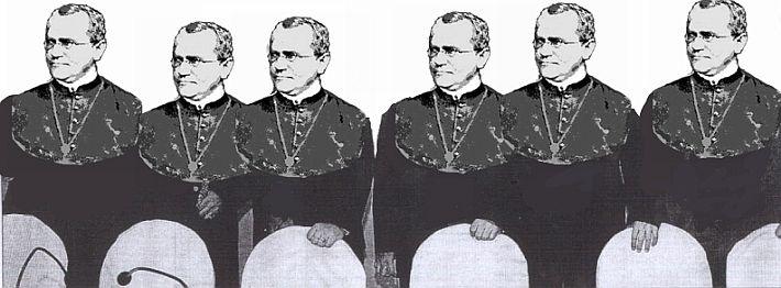 Gregor Mendel…